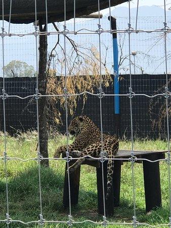 La Casa Del Abuelo Jaguar