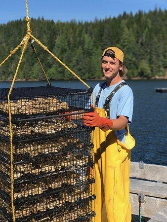 Hump Island Oyster & Kelp Farm with Tasting