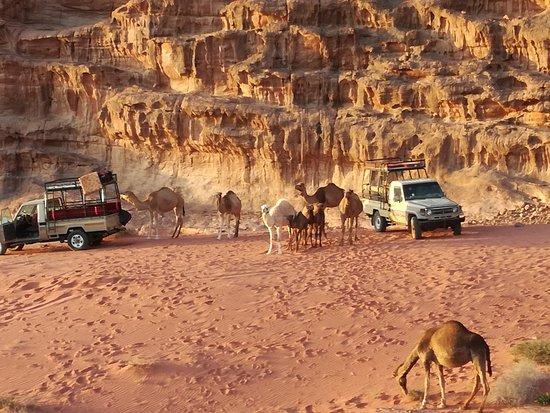 Besuch einer Kamelherde