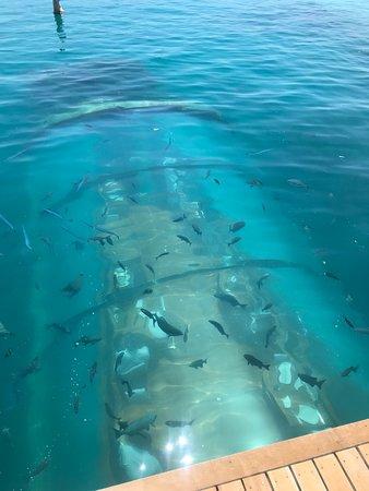 Ithaa Undersea Restaurant Rangali Island Restaurant Reviews