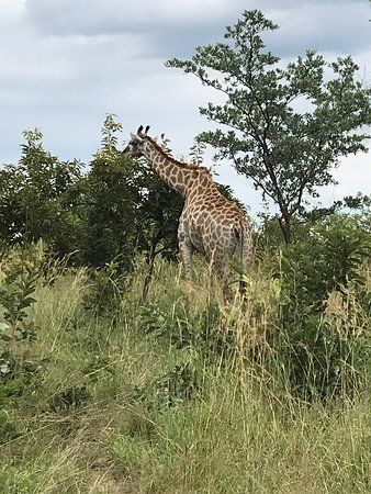 South African National Parks (White River): UPDATED 2019 All You