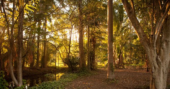 The Pocket, Australia: Beautiful walks by the creek in the glorious evening light