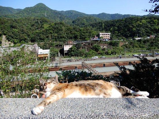 Cat Village Houtong: 享受陽光!