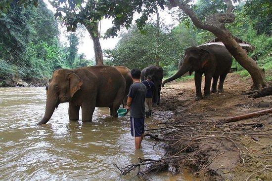 Feed the elephant