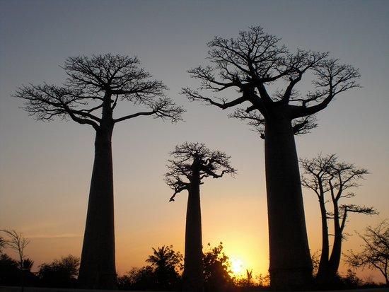 Tsaraventura Madagascar Tour Operator