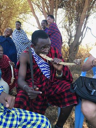 Monduli, Tanzanie : Thomas (a founder of Twende Maasai) showing a tour group how to eat cow ribs in a Maasai village!