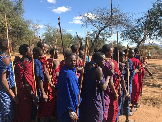 Monduli, Tanzanie : A photo of young Maasai warriors during a celebration, queueing to sing and dance, at Thomas' (a founder of Twende Maasai) boma or village!