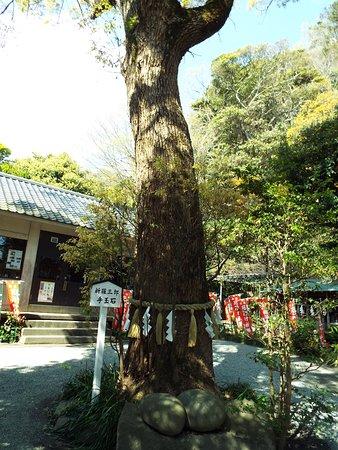 Yakumo Shrine: 境内にある「新羅三郎手玉石」。