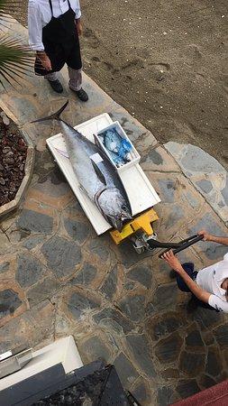 Soleo Marbella: Producto de mercado de gran calidad. Vimos el atún llegar y no pudimos resistirnos. A la brasa poco hecho espectacular. Nooooveeeee!!!