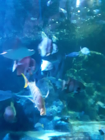 SEA LIFE Grapevine - 2019 All You Need to Know BEFORE You ...