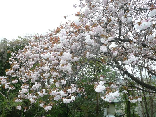 Shimonagaya Shimonnomori