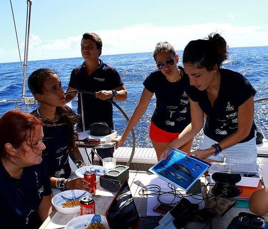 Acantilado de los Gigantes, Španělsko: Seguimiento de mamíferos marinos en la zona SW de Tenerife, Zona de Especial Conservación dentro de la Red Natura 2000, disponemos de un hidrófono a bordo. Estudiamos el comportamiento, clases de edad y estructura de grupos. Calderón tropical y delfin mular residentes.