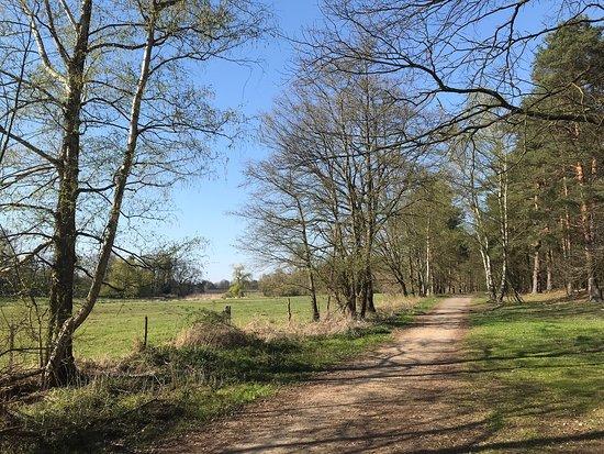 Klein Büenstorfer Heide