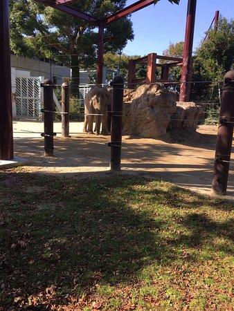 5 elephants in a TINY enclosure