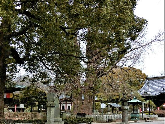 Banna-ji no Ichou