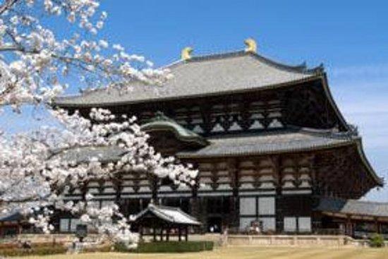 奈良下午游览东大寺,鹿园和春日的春日神社