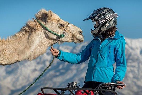 Excursion à dos de chameau et en quad...