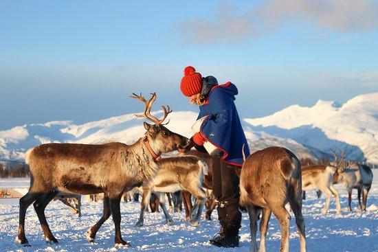 Excursión de alimentación de renos...