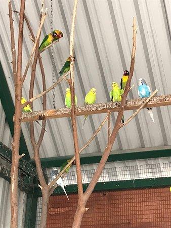 Xenpal Petting Zoo: Aviary