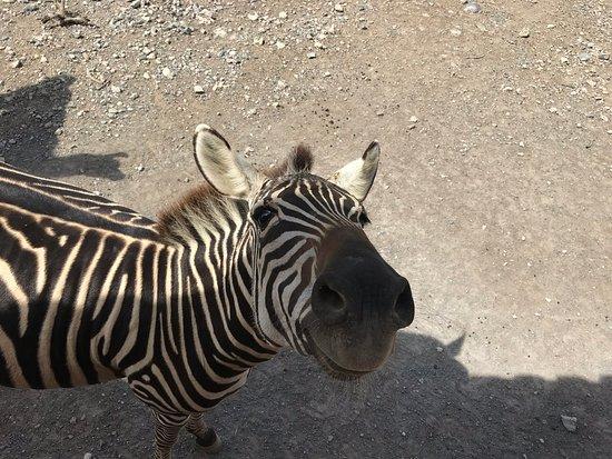 Xenpal Petting Zoo: On safair