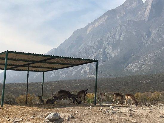 Xenpal Petting Zoo: Safari