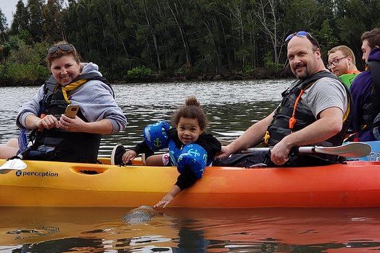 Manatí y delfín kayak
