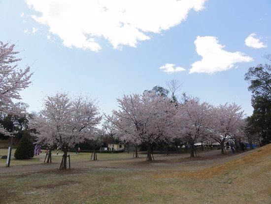 Fukuoka Sakai Sakura Park