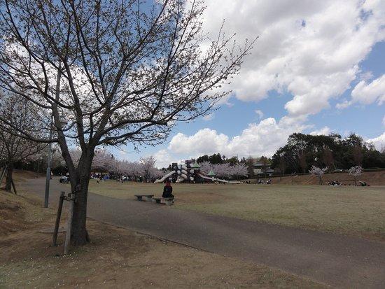 福岡堰さくら公園風景