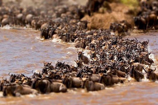 6Days 5Nights, Lake Nakuru Game...