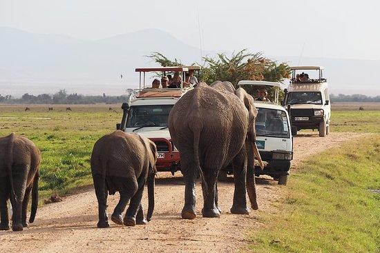 3 dagers Amboseli Big 5 Safari