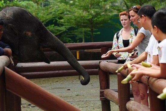 Santuario de elefantes de Kuala...