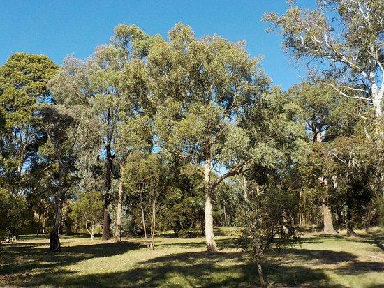 Stephens Reserve