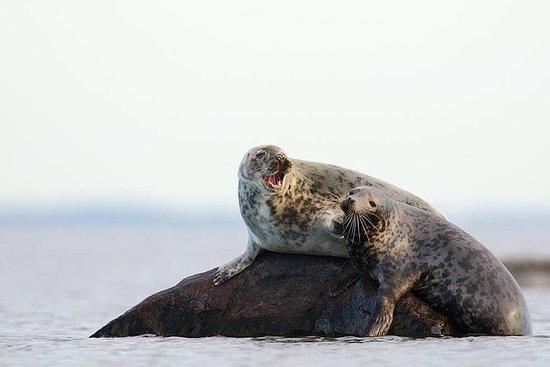 從塔林到北愛沙尼亞群島的海豹觀賞之旅
