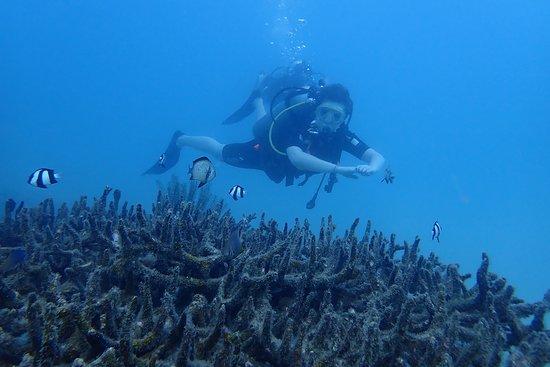 Foto de Nha Trang Sea Star