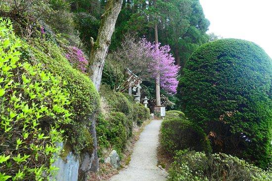 The Hundred Year Sulfur Valley: 百年杉庭園の入口付近の道。神社の鳥居が見えてきました。