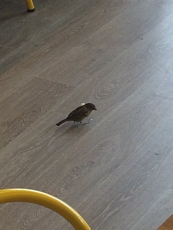 Bird eating food off the floor of the restaurant