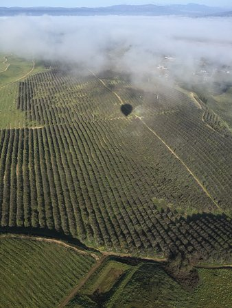 Sunrise Temecula Balloon Flight: Our shadow being cast over the beautiful vineyards below!