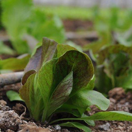 Fresh Garden Tirana