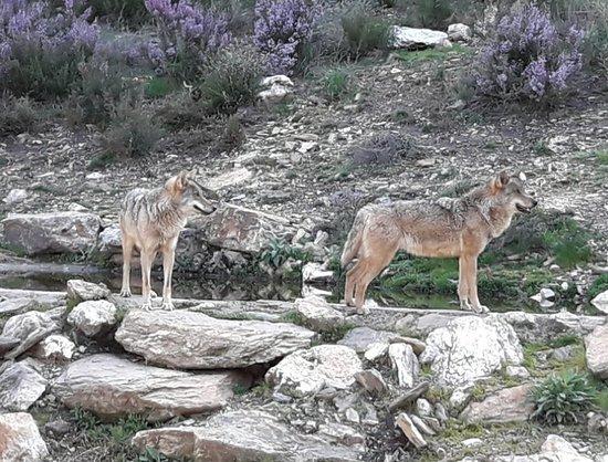 Centro del Lobo Iberico