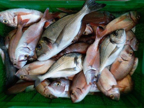 Cesme, Thổ Nhĩ Kỳ: YILDIZBURNU balık mezatı Ilıca ÇEŞME