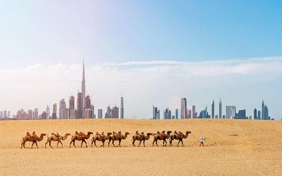 Horse Riding Agadir