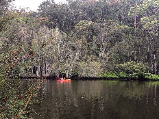 Nothing better than going for a kayak or canoe along the Clyde River. It's the best way to see the local wildlife like fish, birds, jellyfish and even kangaroos! If you don't have your own craft you can hire them from Nelligen. Too day out on the water!