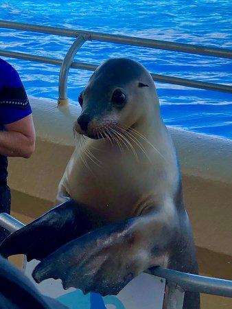 Seals - amazing clever creatures