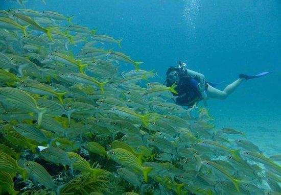 www.aquariusdivingclub.com