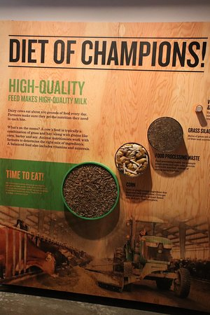 Tillamook Creamery: Diet of Champions