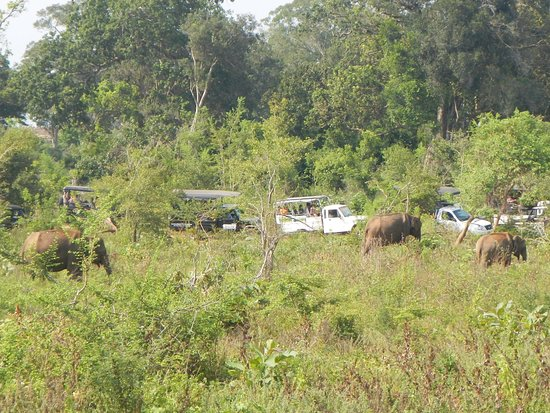 Udawalawe National Park: When in Sri lanka
