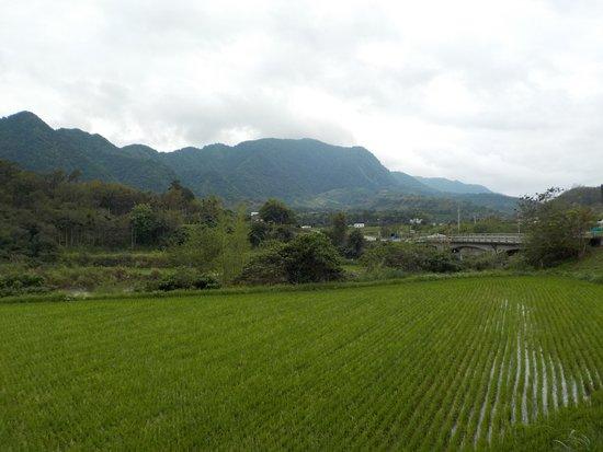 稻田綠山林