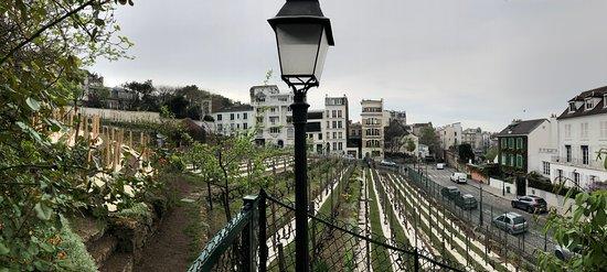 The last vineyard in Paris