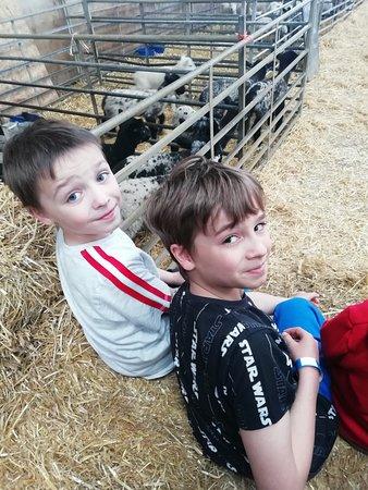 My boys getting ready for feeding the lambs