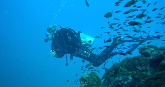 New Way Diving照片